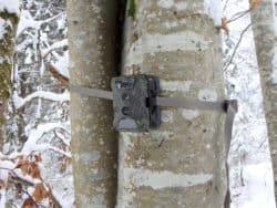 Wildkamera Test 2020: Der Vergleich aktueller Geräte 1